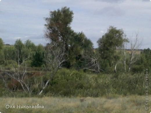Хочу познакомить всех с Волжскими степями. Очень мне нравится наша природа, дышится легко!!! Безгранична наша матушка земля!!!  фото 15
