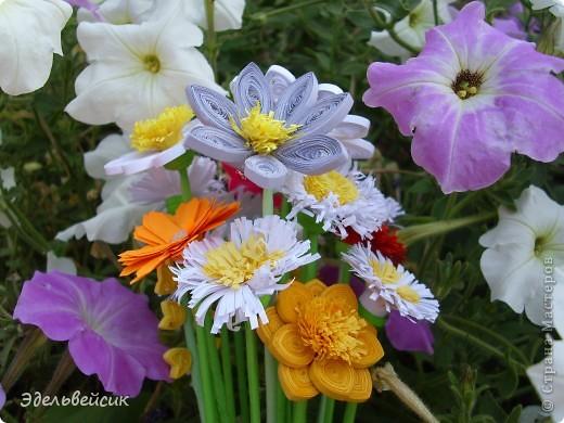 Букетик квиллинг-цветочков фото 1