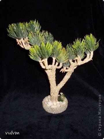 первое дерево из новой серии - проба фото 5