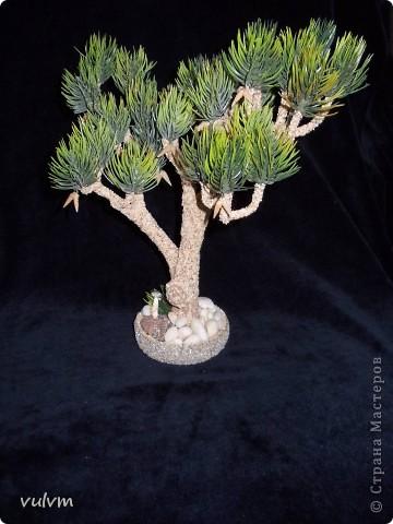 первое дерево из новой серии - проба фото 6