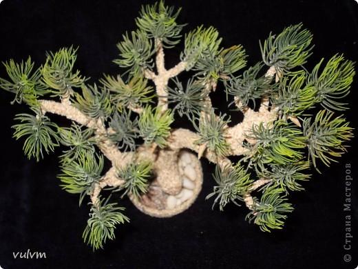 первое дерево из новой серии - проба фото 7