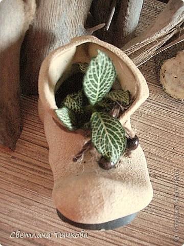 В последнее время всё больше тяготею к декоративнолистным комнатным растениям.Алоказия-родина тропическая Азия.Довольно редкое растение.С очень крупными(30-40см.в длину)овально-стреловидными листьями на сочных длинных черешках. фото 19