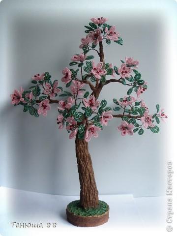 Яблоня в цвету фото 1