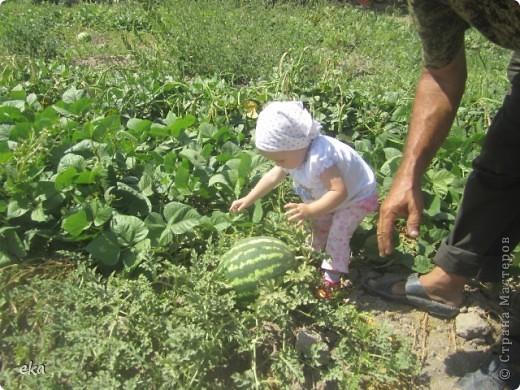 Три простых правила выращивания больших и сладких