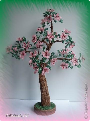 Яблоня в цвету фото 2