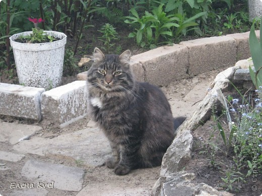 Каменистая горка перед домиком фото 7