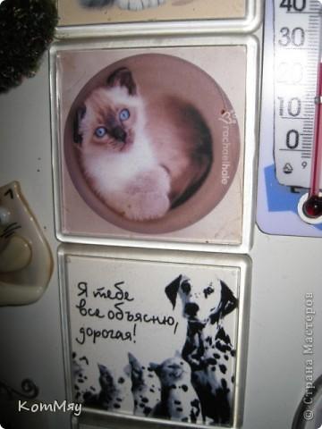 Выкладываю первую часть своей коллекции магнитов.  Тема - КОШКИ.  Этот магнит куплен в подмосковном городе Верея. Пластик фото 46