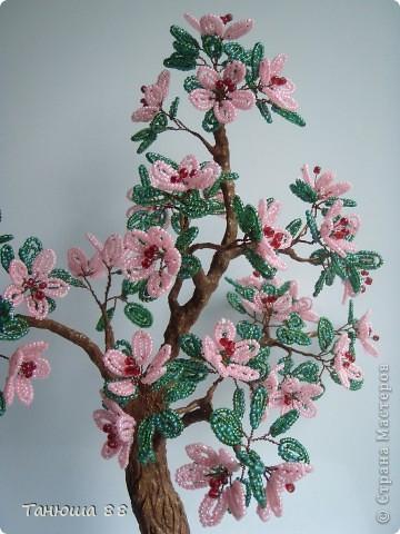 Яблоня в цвету фото 3
