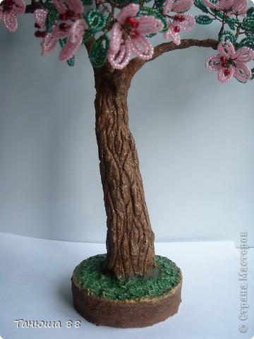 Яблоня в цвету фото 4