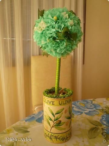 Оливковое деревце
