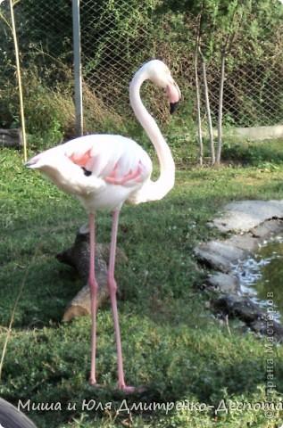 В прошлый раз мы беспокоили зверушек, а теперь пришла очередь птичек!!!! фото 6
