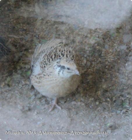 В прошлый раз мы беспокоили зверушек, а теперь пришла очередь птичек!!!! фото 8