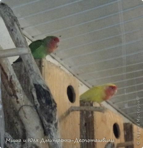 В прошлый раз мы беспокоили зверушек, а теперь пришла очередь птичек!!!! фото 10