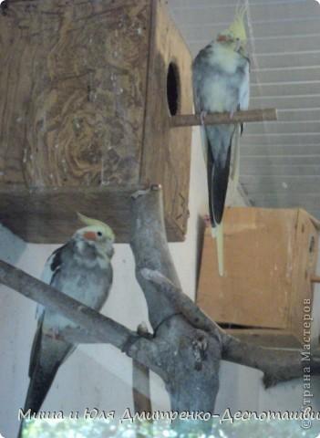 В прошлый раз мы беспокоили зверушек, а теперь пришла очередь птичек!!!! фото 11
