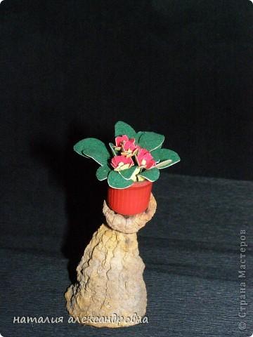 сансивьера в крышке от клея-карандаша на пластилине фото 17