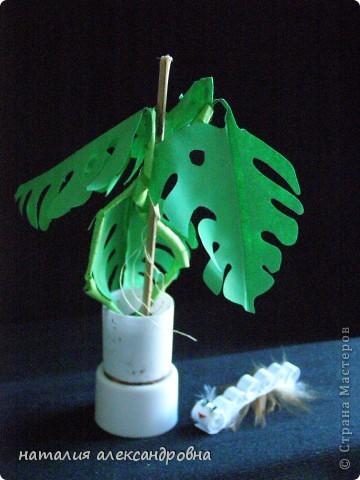 сансивьера в крышке от клея-карандаша на пластилине фото 7