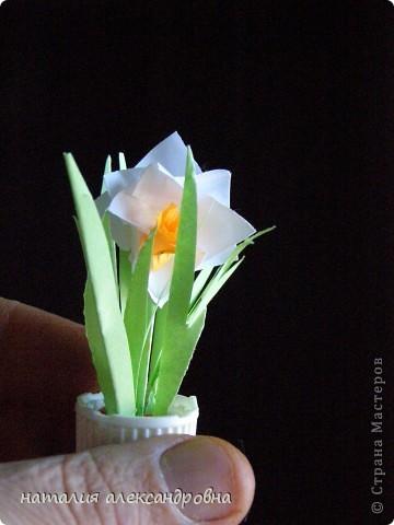 сансивьера в крышке от клея-карандаша на пластилине фото 19