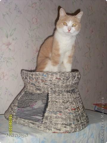 ждёт пока домик просохнет)))) фото 3