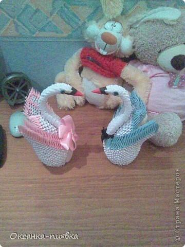 Мои лебеди фото 3