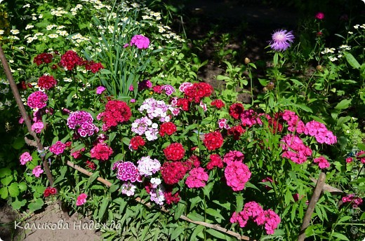 Наконец дошли руки до фотографий. Мои любимые цветы!!!С весны до осени! фото 4