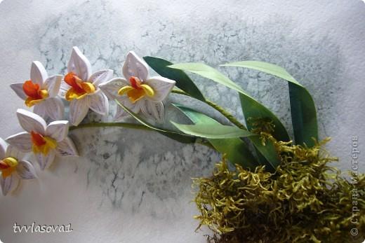 орхидея на ветру... фото 2