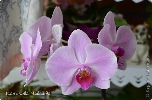 Наконец дошли руки до фотографий. Мои любимые цветы!!!С весны до осени! фото 16