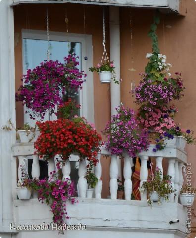 Наконец дошли руки до фотографий. Мои любимые цветы!!!С весны до осени! фото 26