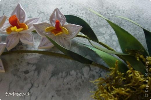 орхидея на ветру... фото 3