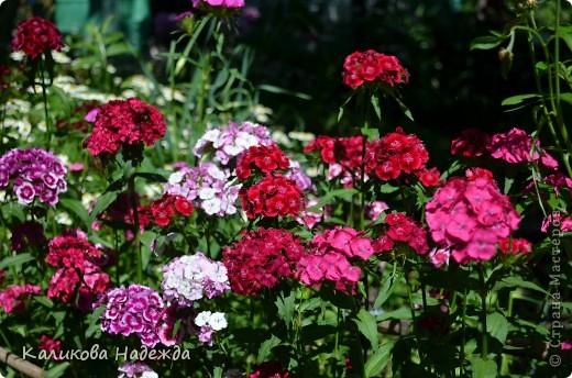 Наконец дошли руки до фотографий. Мои любимые цветы!!!С весны до осени! фото 1