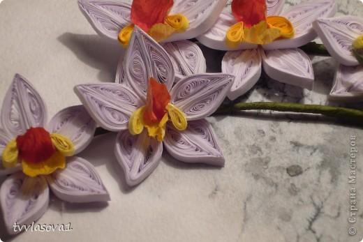 орхидея на ветру... фото 4