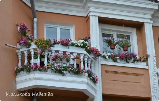 Наконец дошли руки до фотографий. Мои любимые цветы!!!С весны до осени! фото 27