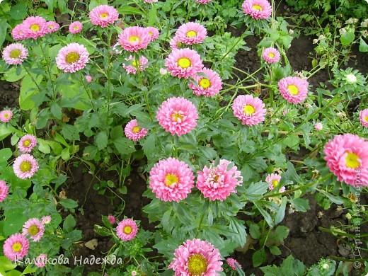Наконец дошли руки до фотографий. Мои любимые цветы!!!С весны до осени! фото 20
