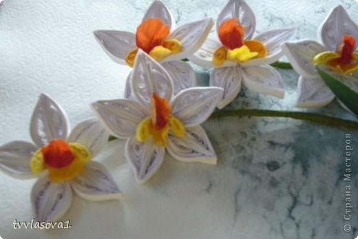 орхидея на ветру... фото 5