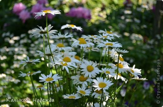 Наконец дошли руки до фотографий. Мои любимые цветы!!!С весны до осени! фото 5