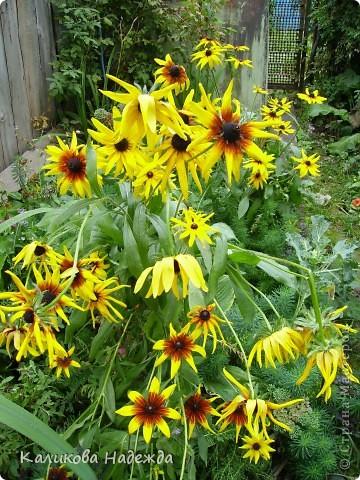 Наконец дошли руки до фотографий. Мои любимые цветы!!!С весны до осени! фото 21