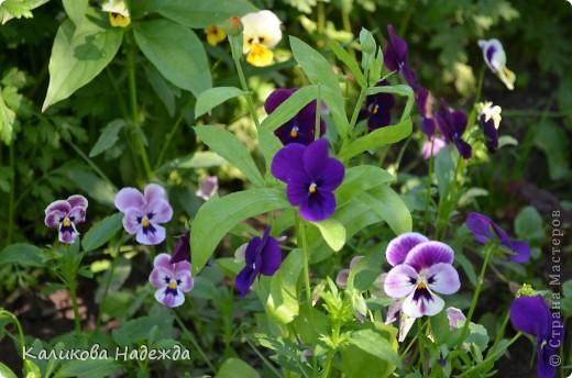 Наконец дошли руки до фотографий. Мои любимые цветы!!!С весны до осени! фото 6