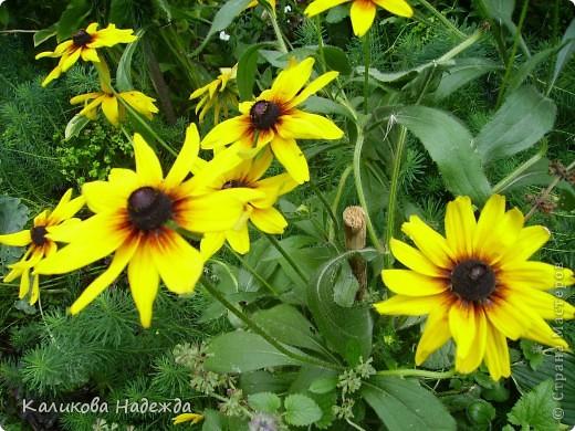 Наконец дошли руки до фотографий. Мои любимые цветы!!!С весны до осени! фото 22