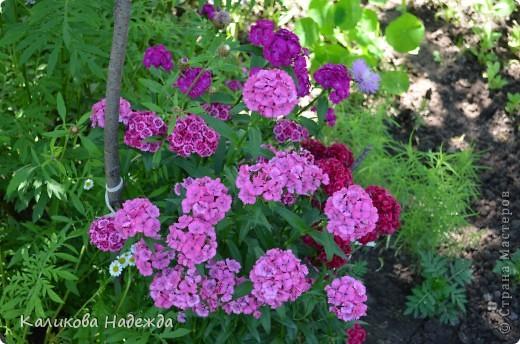 Наконец дошли руки до фотографий. Мои любимые цветы!!!С весны до осени! фото 2