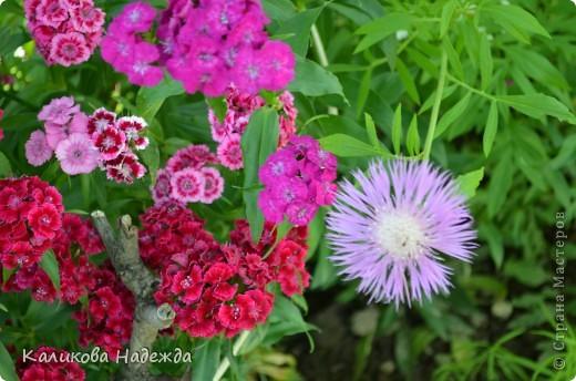Наконец дошли руки до фотографий. Мои любимые цветы!!!С весны до осени! фото 3