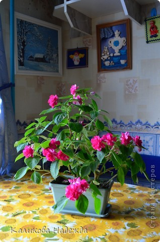 Наконец дошли руки до фотографий. Мои любимые цветы!!!С весны до осени! фото 17