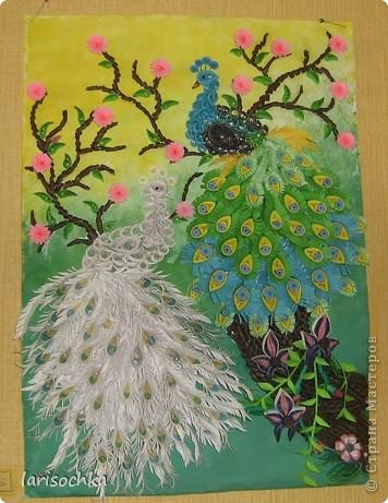 Райские птици фото 1
