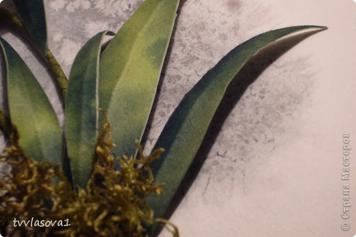 орхидея на ветру... фото 6