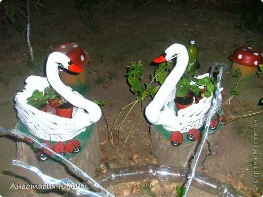 Лебеди-повторюшки фото 1
