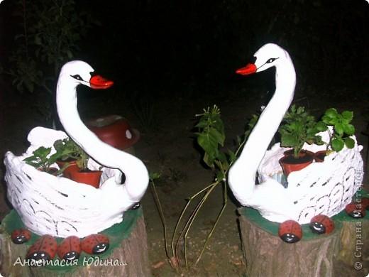 Лебеди-повторюшки фото 2