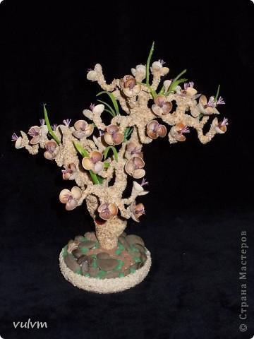 деревцо в одном из стилей бонсая фото 2