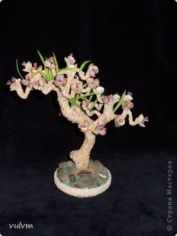 деревцо в одном из стилей бонсая фото 4