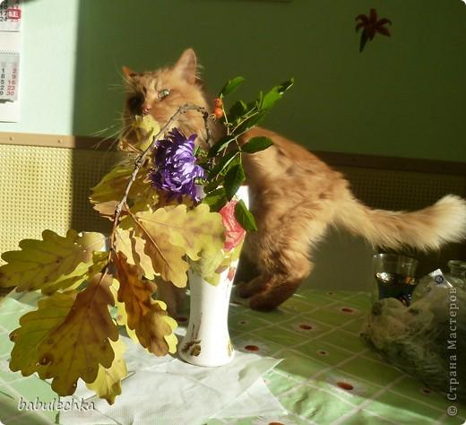 В процесс  показа  веточки дуба в вазочке  вмешался  кот Василий!..,,, фото 1