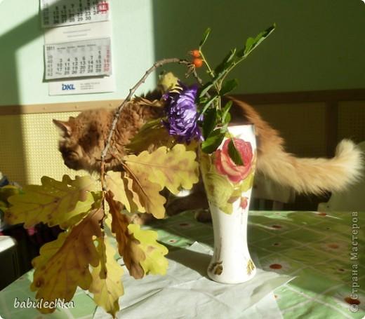 В процесс  показа  веточки дуба в вазочке  вмешался  кот Василий!..,,, фото 2