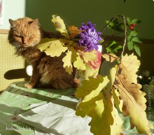 В процесс  показа  веточки дуба в вазочке  вмешался  кот Василий!..,,, фото 3
