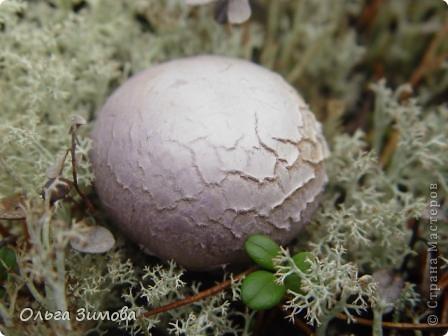 Да да. Я не ошиблась. Корзина с грибами, потому что цветы- это высохшие и растрескавшиеся грибы- дождевики. фото 2